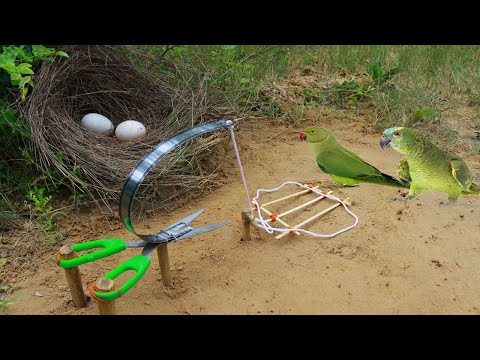 Amazing Quick Parrot Bird Trap Technology Make From Cuter And Catch Eggs Parrot in nest