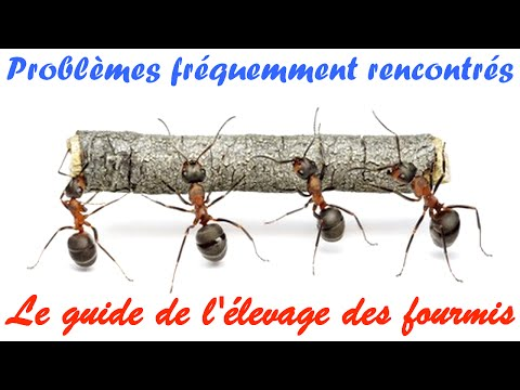pourquoi j'ai des fourmis dans la maison