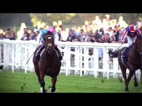 frankel - Made for the final BBC Horseracing Broadcast and voiced by Steven Berkoff, this tells the story of Frankel and his legendary bloodline.