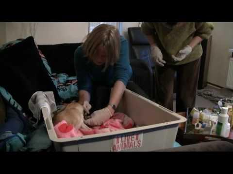 An's Angels: geboorte Chihuahua Luna