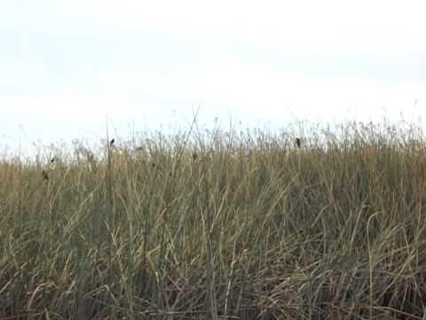 Birds of the Suisun City, CA Marsh