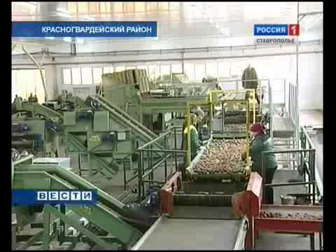 The Head of the Ministry of Agriculture Has Visited  AGRICO Vegetable Storage Facility in Pregradnoye Village