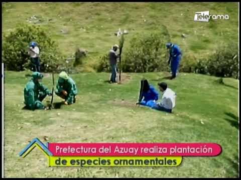 Prefectura del Azuay realiza plantación de especies ornamentales