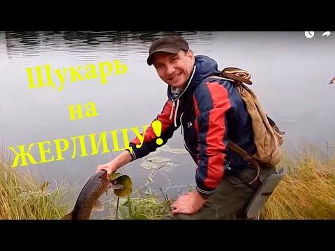 ловля щуки летом 2015 видео