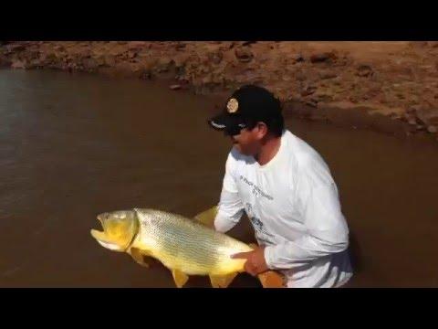 Pesca de dourado em Foz do Igua�u