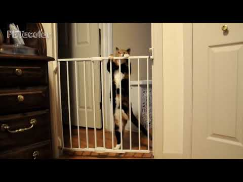 Funny Cat Videos  Hilarious Cats Vs Baby Gates Compilation 2019