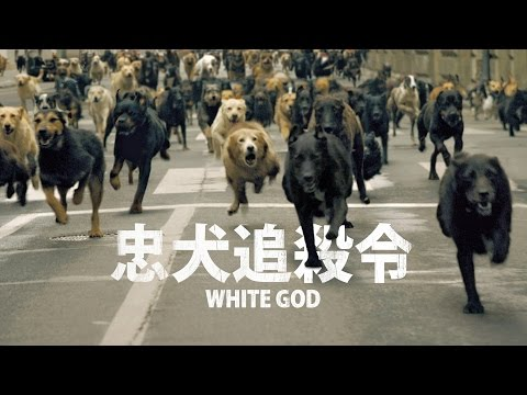 《忠犬追殺令》White God- 電影開場片段