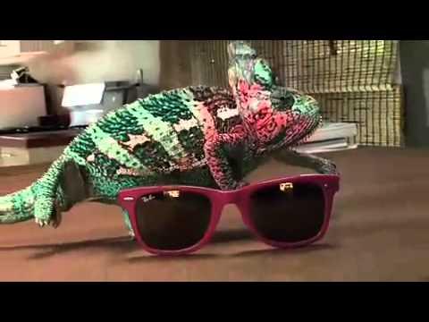 camaleonte cambia colore a ritmo di musica!