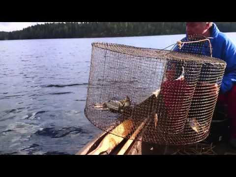 Мордушка для рыбалки