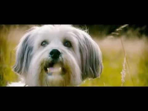 酷狗來找喳 PUDSEY: THE MOVIE 電影預告