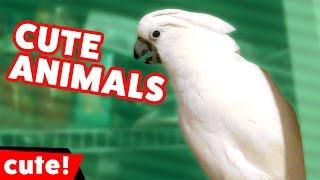 animale faze animale comice