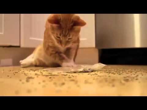 Кот нашел кошачью мяту
