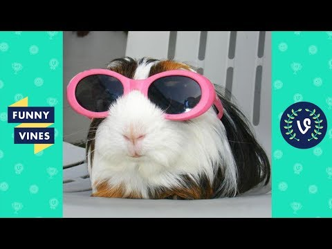 [30 MIN] ULTIMATE Funny Animals Compilation 2018 - Best Animal Videos | Funny Vine