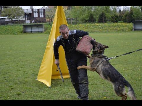 Rychvald - Kynologové - ukázky z výcviku psů