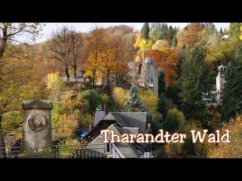 Tharandter Wald über die Burgruine, den Forstbotanischen Garten und den Mauerhammer