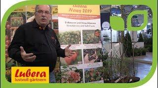 Neue Himbeeren von Lubera: die Sommer Chef® Sommerhimbeere