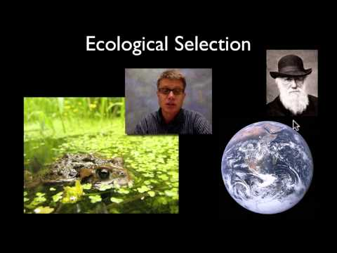 Selection - Paul Andersen explains the importance of selection in biology. Artificial selection occurs when humans choose traits that will be selected for or against. Th...