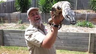 LIVE Feeding WILD Australian Lizards by Prehistoric Pets TV