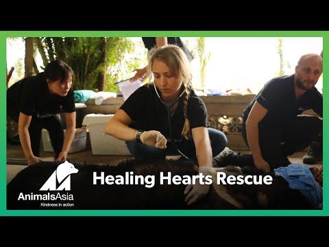 Healing Hearts Rescue