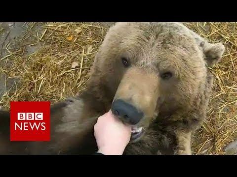 Meet Mansur, man's bear friend - BBC News