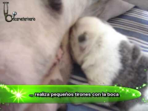 Reflejo de succión en un cachorro