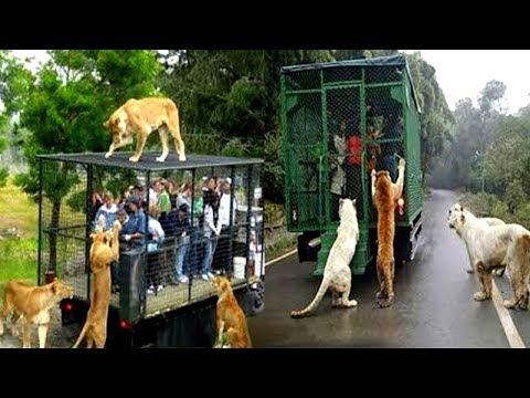 7 giardini zoologici più pericolosi e strani del mondo!