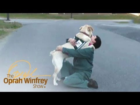 Service Dog Helps Veterans | The Oprah Winfrey Show | Oprah Winfrey Network