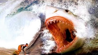 12 Most Dangerous Enemies of the Megalodon by Epic Wildlife