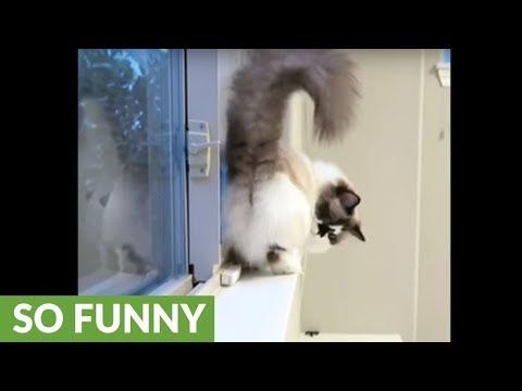 il-gatto-che-fa-la-moonwalk