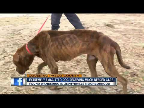Extremely emaciated dog saved from neglect after concerned neighbors take action