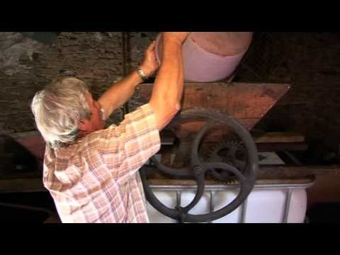 WINE MAKING BY A FRENCH FAMILY IN THE TRADITIONAL OLD FASHION WAY.