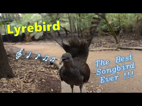 Az összes Star Wars hangot képes utánozni ez a madár!