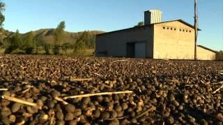 VÍDEO: PIB do agronegócio de Minas Gerais bate recorde em 2013