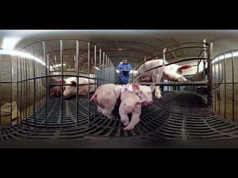 iAnimal - Dietro la carne a 360° - Narrato da Giulia Innocenzi