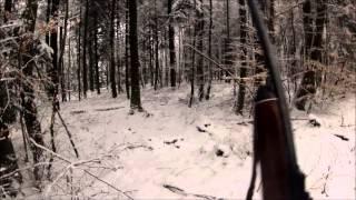 Chasse Au Sanglier En Battue; Fin De Saison Dans Le Département Des Vosges, Caméra Embarquée