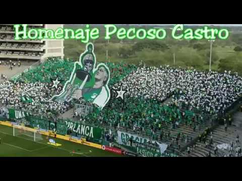 Homenaje con Tifo al Pecoso Castro - Frente Radical Verdiblanco - Deportivo Cali