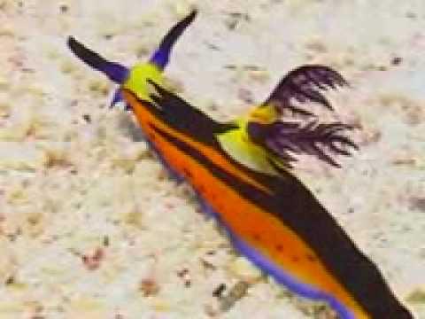 ANEH TAPI NYATA (Ikan/Siput yang terbilang langka didunia)
