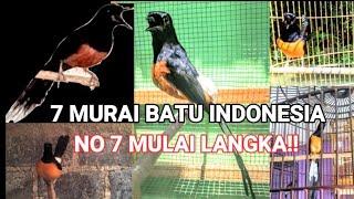 Video 7 JENIS MURAI BATU INDONESIA!!! NO 7 MULAI LANGKA MP3, 3GP, MP4, WEBM, AVI, FLV Mei 2019