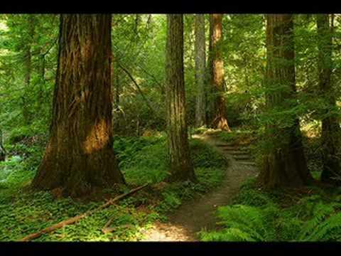 Tekst piosenki Żeglarska - Shady Grove po polsku