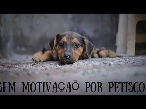 Video Cães Que Não São Motivados por Petiscos: Como Treinar? download in MP3, 3GP, MP4, WEBM, AVI, FLV January 2017