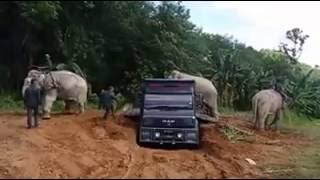 Video Gajah liar masuk kampung MP3, 3GP, MP4, WEBM, AVI, FLV November 2018