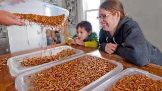 Video I surprised my wife with 5,000 mealworms… MP3, 3GP, MP4, WEBM, AVI, FLV Desember 2018