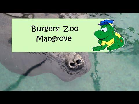Burgers' Mangrove