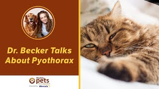 Dr. Becker Talks About Pyothorax