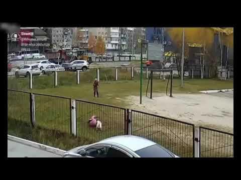 Agresywny pies atakuje dzieciaków na terenie szkoły. Nagranie z monitoringu