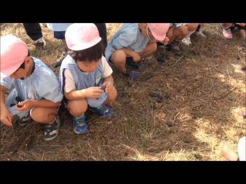 ぶどう狩り 笠間市 ともべ幼稚園 園長ブログ