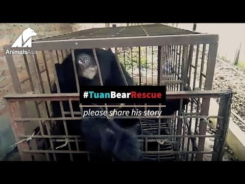 Emergency Bear Rescue from an Illegal farm in Tam Duong