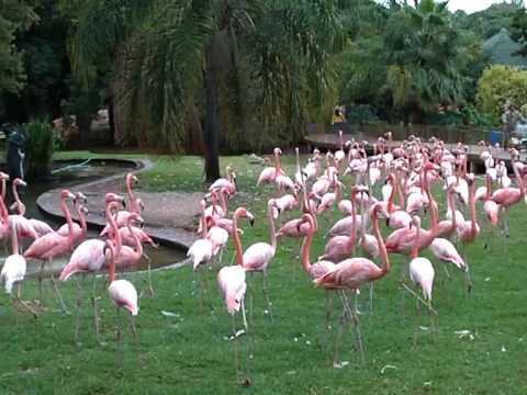 Flamingos at Pretoria Zoo