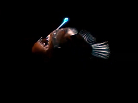 The Amazing Bioluminescence Of Deep Sea Creatures
