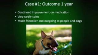 Zoobiquity: OCD And General Anxiety Disorder In Humans/Dogs
